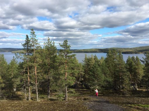 Paljaspää, Jyväskylä Muuratsalo