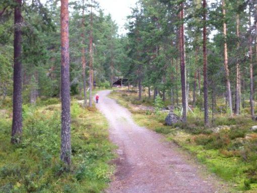Sarvivuori, Jyväskylä