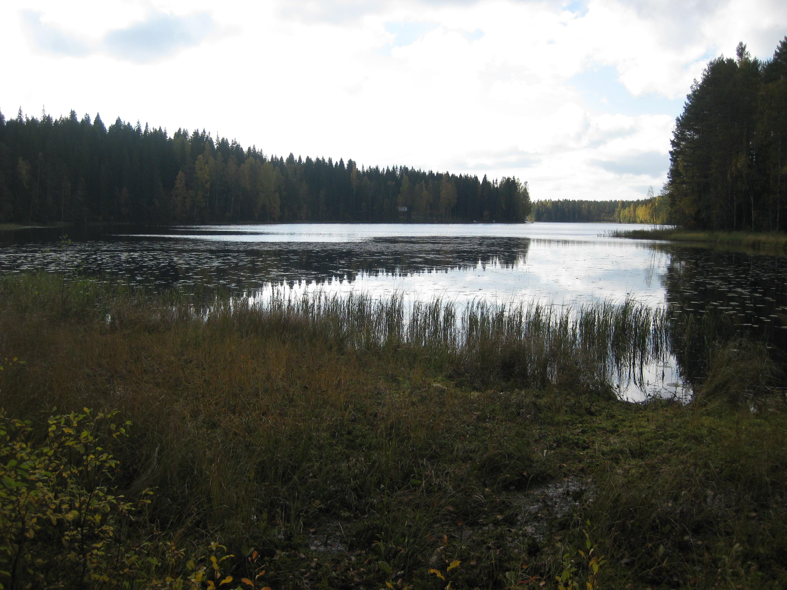 Ylä-Sallaajärven ranta